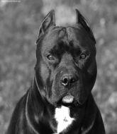 MMA MHandicapper - PvMachado BR Dogs