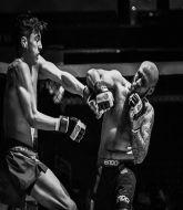Mixed Martial Arts Management - Power Shark
